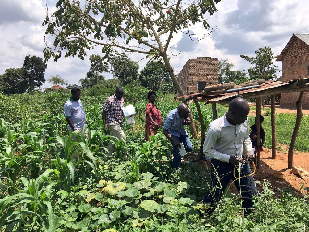 Dr  Emmanuel Ogwok , John Francis Osingada, Geoffrey Okao-Okuja, and Phillip Abidrabo collect samples on Naomi Kutesakwe's farm in Wakiso, Uganda. Photo: Laura Boykin