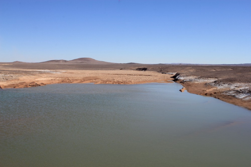 Scientists testing the waters of lagoons caused by unusual rains discovered mass extinctions of microbes that had been uniquely adapted to survive in hyperarid conditions.