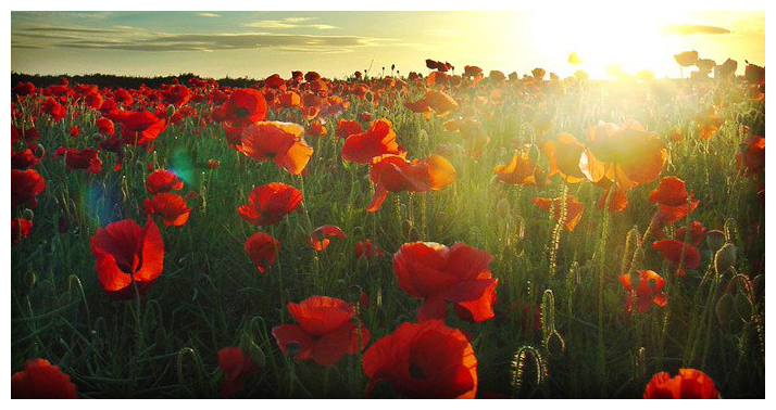Lest we forget. Thank you for the freedom we enjoy, and the liberties we savour.