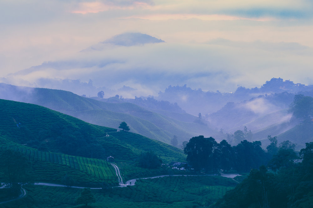 Cameron Highlands-1.jpg