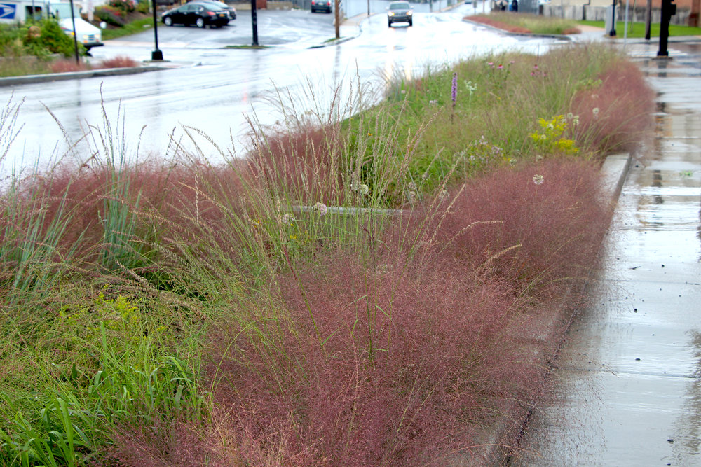 This series of bioretention facilities in Lancaster, PA, use over twenty different species to create a dense, functional matrix that is buzzing with life.