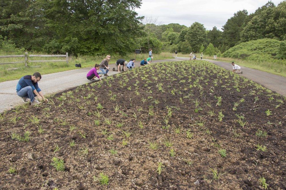 Adkins Arboretum entry meadow