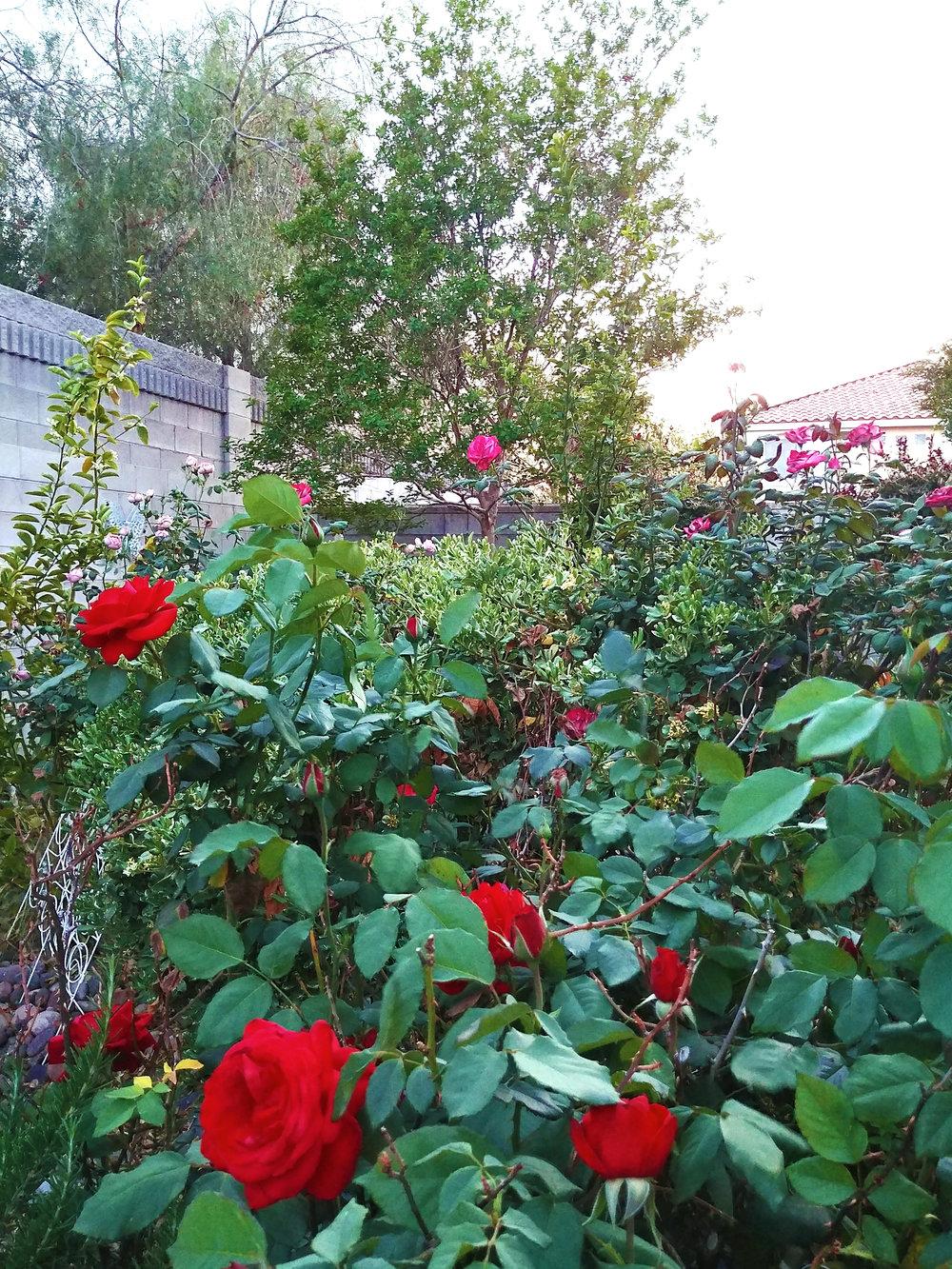 g6 roses.jpg