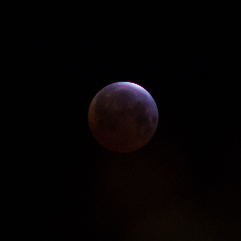 210mm and cropped to fill more of the frame. Without anything around it is rather plain.