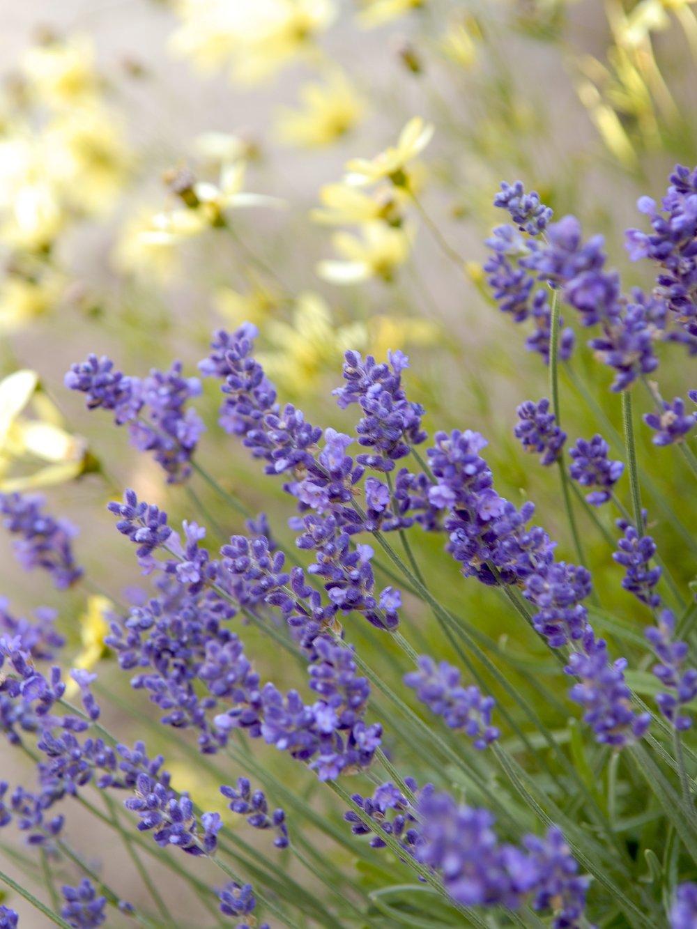 gardennew5.jpg