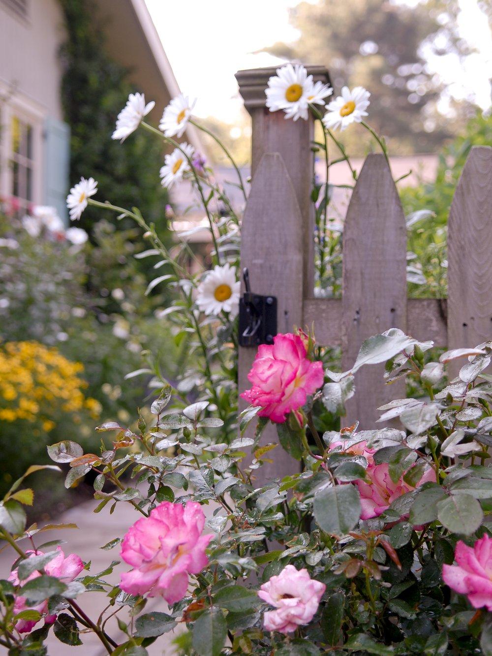gardennew8.jpg