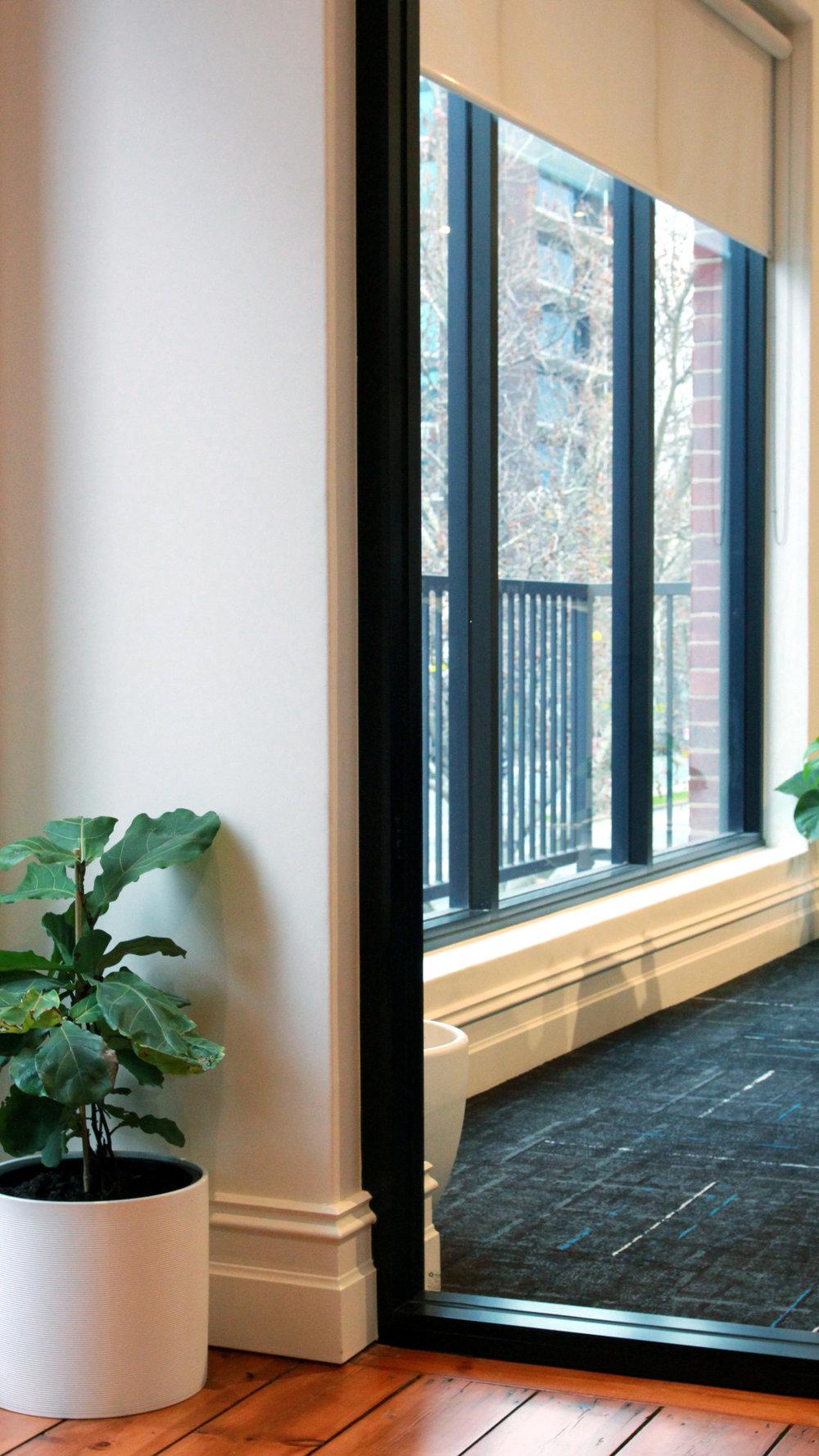plant_window.jpg