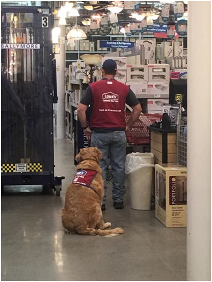 Lowe's Service Dog.png