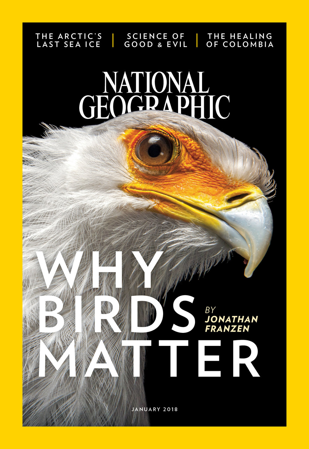 national-geographic-magazine-january-2018-why-birds-matter-cover.jpg