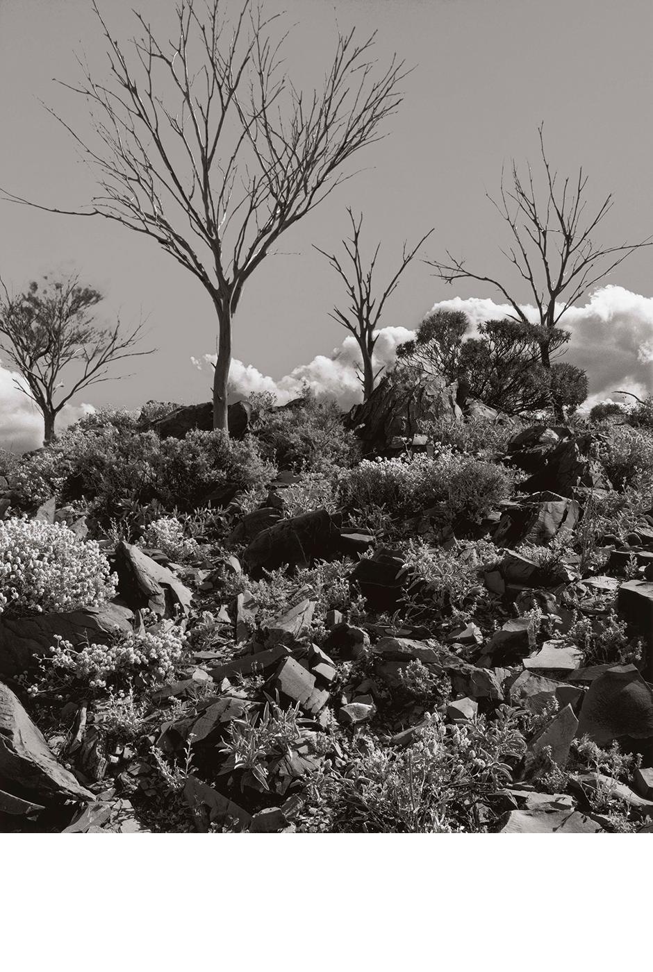 Balcanoona Landscape