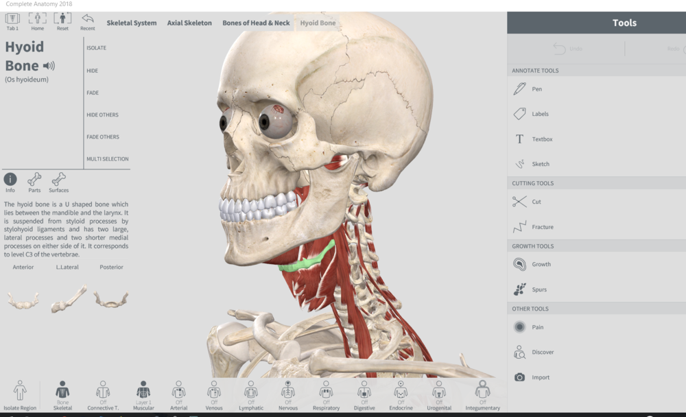 3D4Medical Complete Anatomy 5