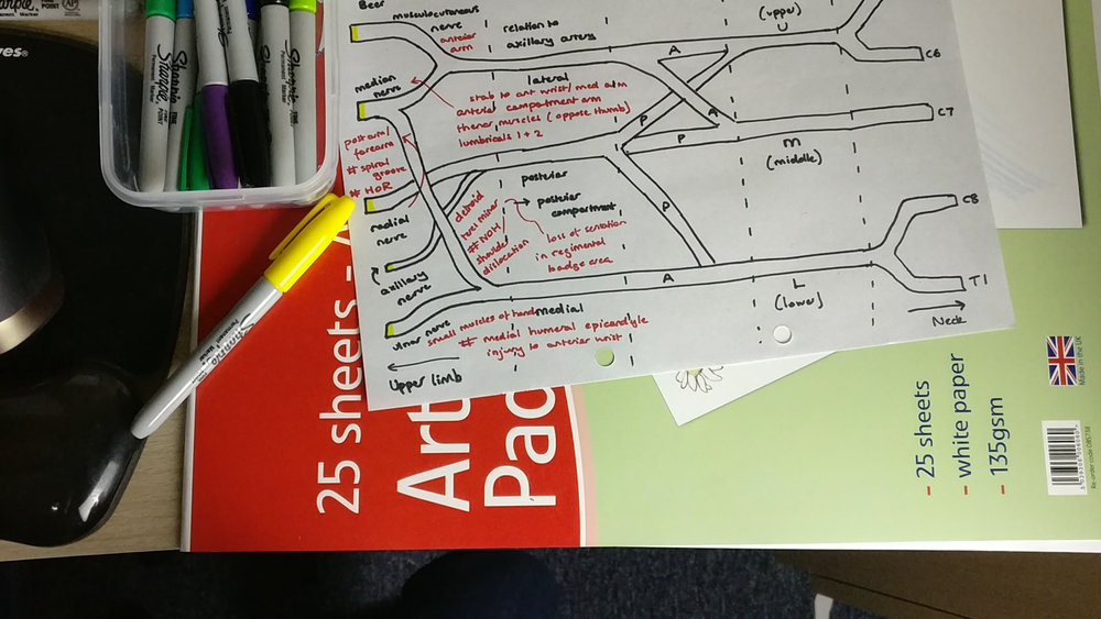 My rough attempt at the brachial plexus with crammed notes