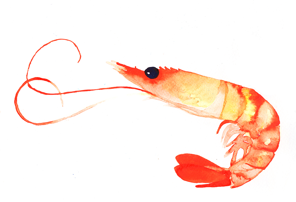 """Prawn"" Watercolour on Paper, 2018"