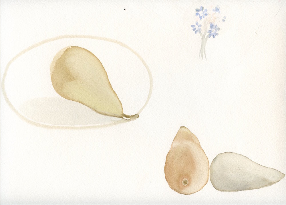 three pears   watercolour  31x36cm