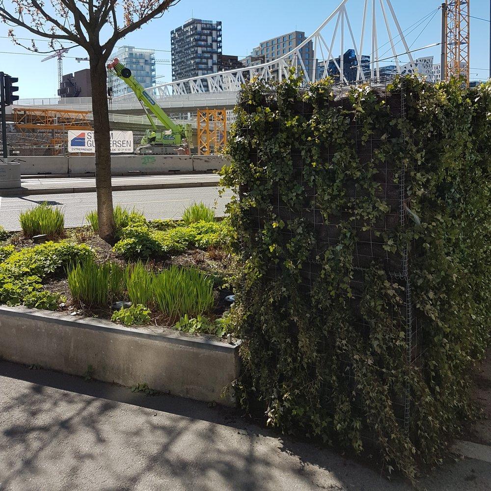 Bullervägg med gröna växter mot vägsidan och vertikal odling av nyttoväxter mot fastighetssidan