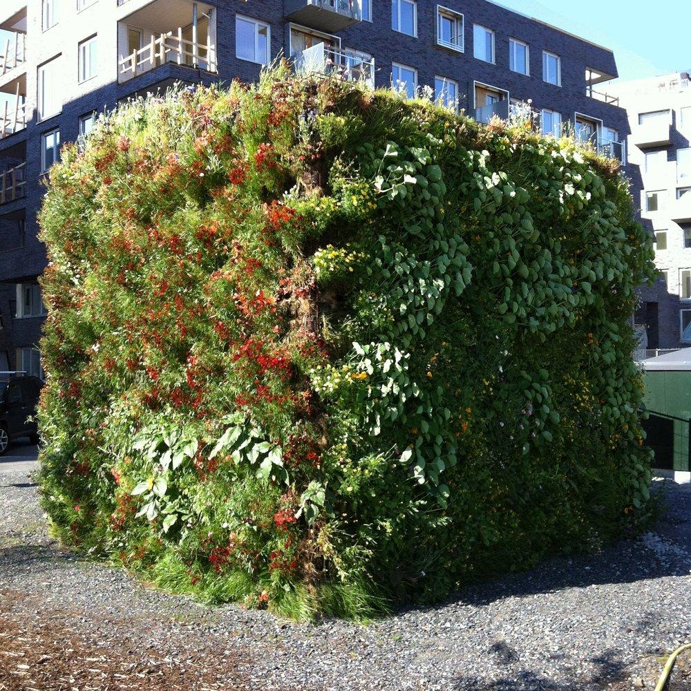 Kuben installation med vertikal odling och bullerdämpning