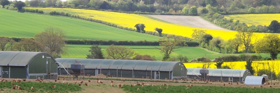 ....Organic Poultry Feed..Bwyd Dofednod Organig.... - ....We are proud to be the UK's leading supplier of organic poultry feed, and work in partnership with Organic UK and our organic certifier, Organic Farmers and Growers. ..Rydyn ni'n falch o fod yn gyflenwr mwyaf blaenllaw y DU o fwyd dofednod organig, ac rydyn ni'n gweithio mewn partneriaeth ag Organic UK a'n hardystiwr organig, Organic Farmers and Growers. ....