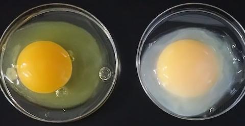 eggies.png