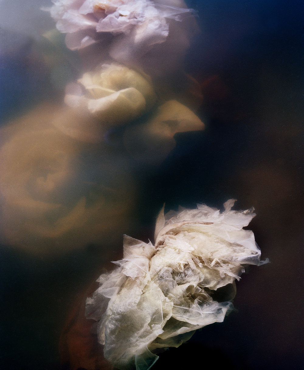 Dark Matter #12 (White Sinking Rose)