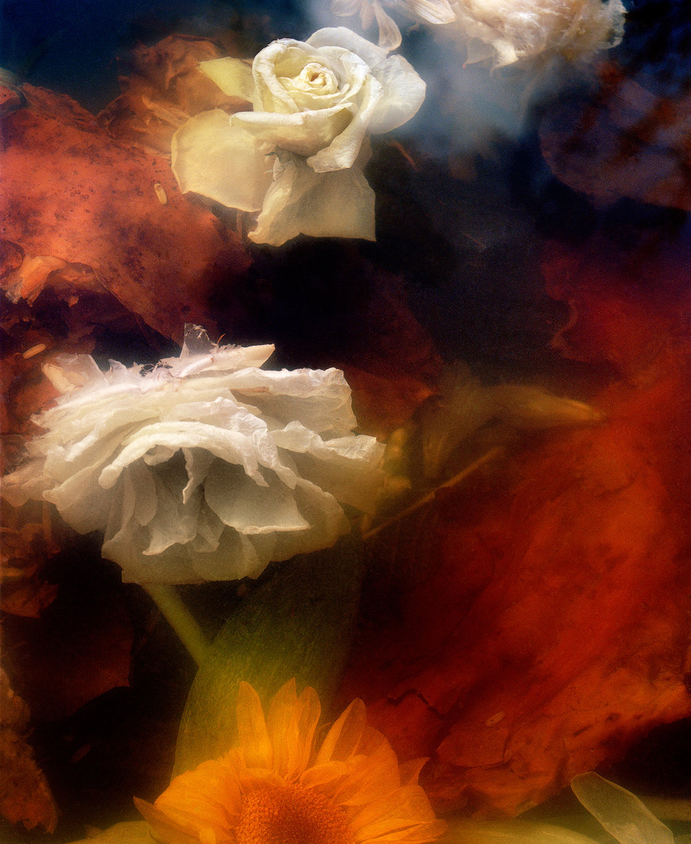 Dark Matter #13 (Sinking Rose and Sunflower)