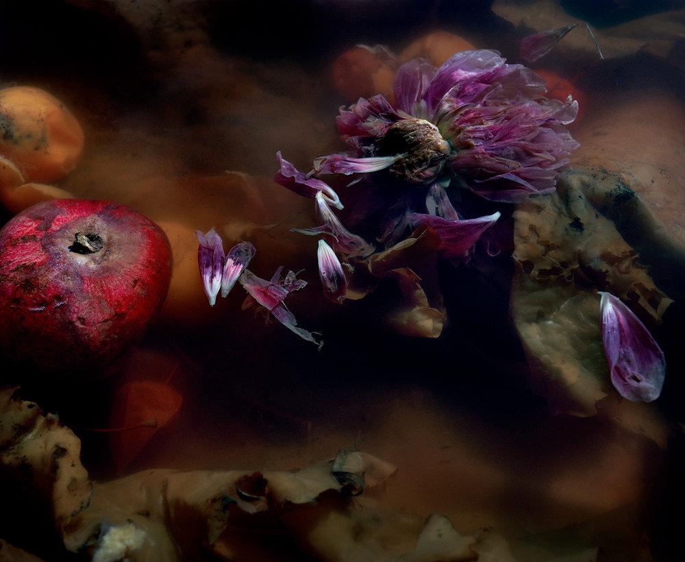Dark Matter #4 (Floating Purple Dahlia)