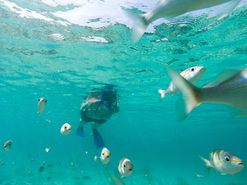 Follow the fish     #WHPonthego   (at Aruba)