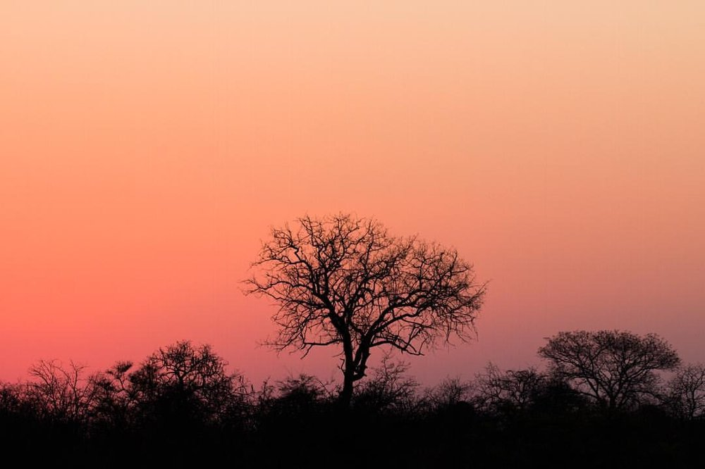 Those African sunsets are undeniable     #bigcatsplayball     (at Kruger National Park, South Africa)