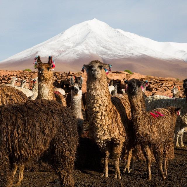 ¿Cómo se llamas? #antarcticaordie (at Bolivia)