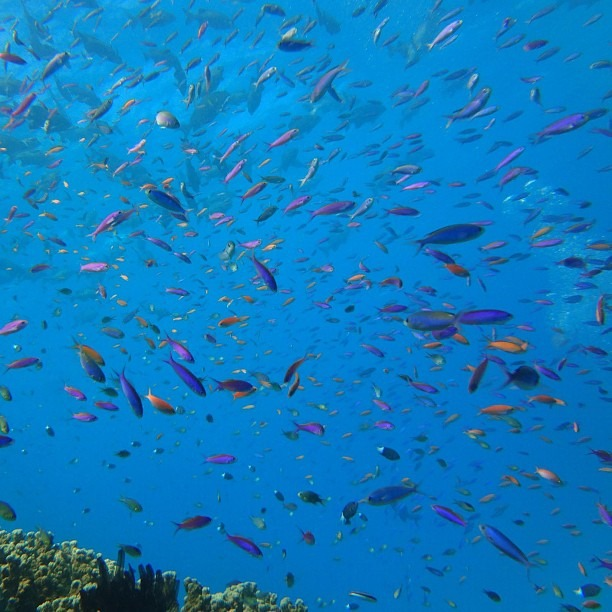 Abundant Life (at Great Barrier Reef)