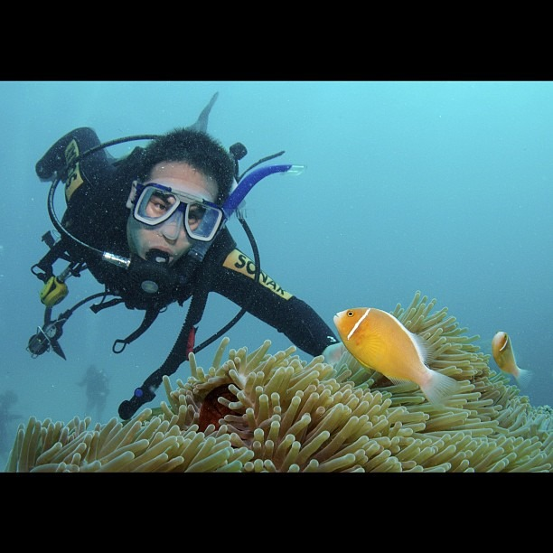 Nemo's cousin and me (at Great Barrier Reef)