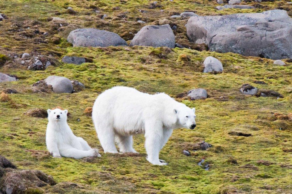 This Arctic Life