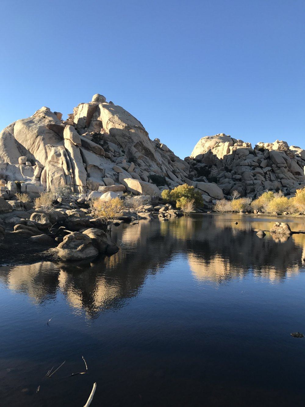 An oasis at Joshua Tree National Park