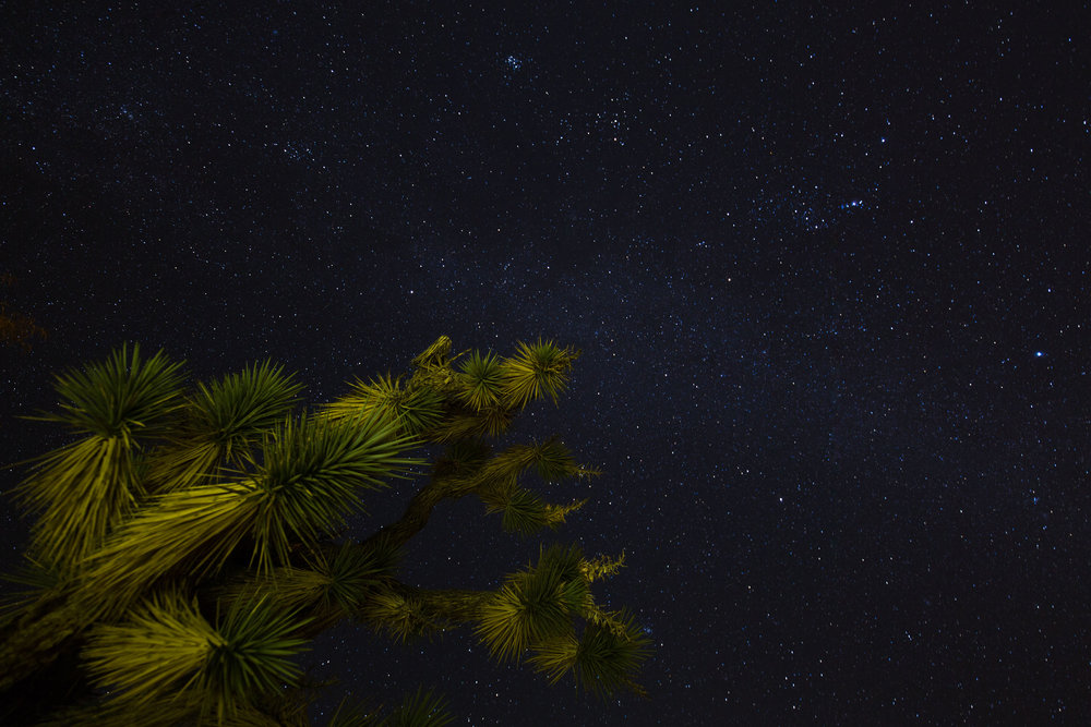 I accidentally light painted this Joshua tree with my iphone during a long exposure
