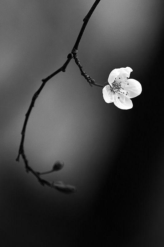 Flower - Sanctification.jpg