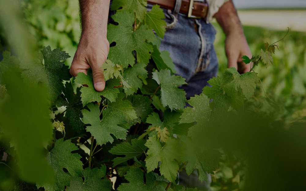 Think of the changing of the seasons, in a journey from vine to bottle.  Think it takes a lifetime to be a winemaker? Think again.