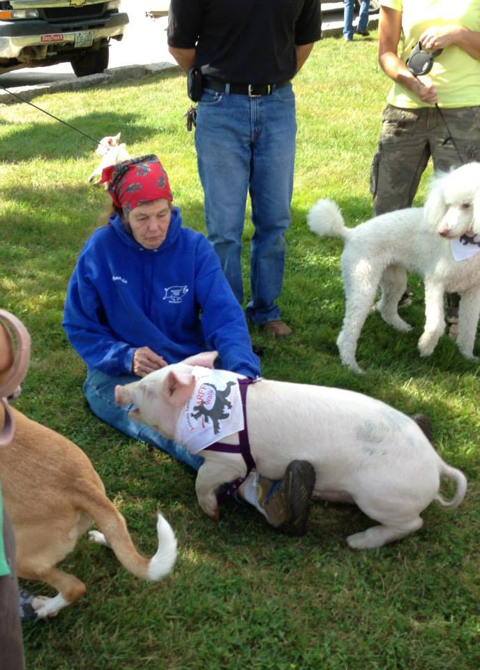 The ARFF Walk isn't just for dogs - some years have drawn chickens, mini-horses and pigs.
