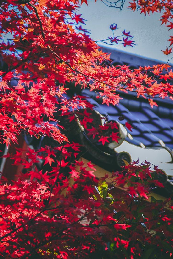 quand partir au japon asie kiyomizu dera automne kyoto blog voyage photographie
