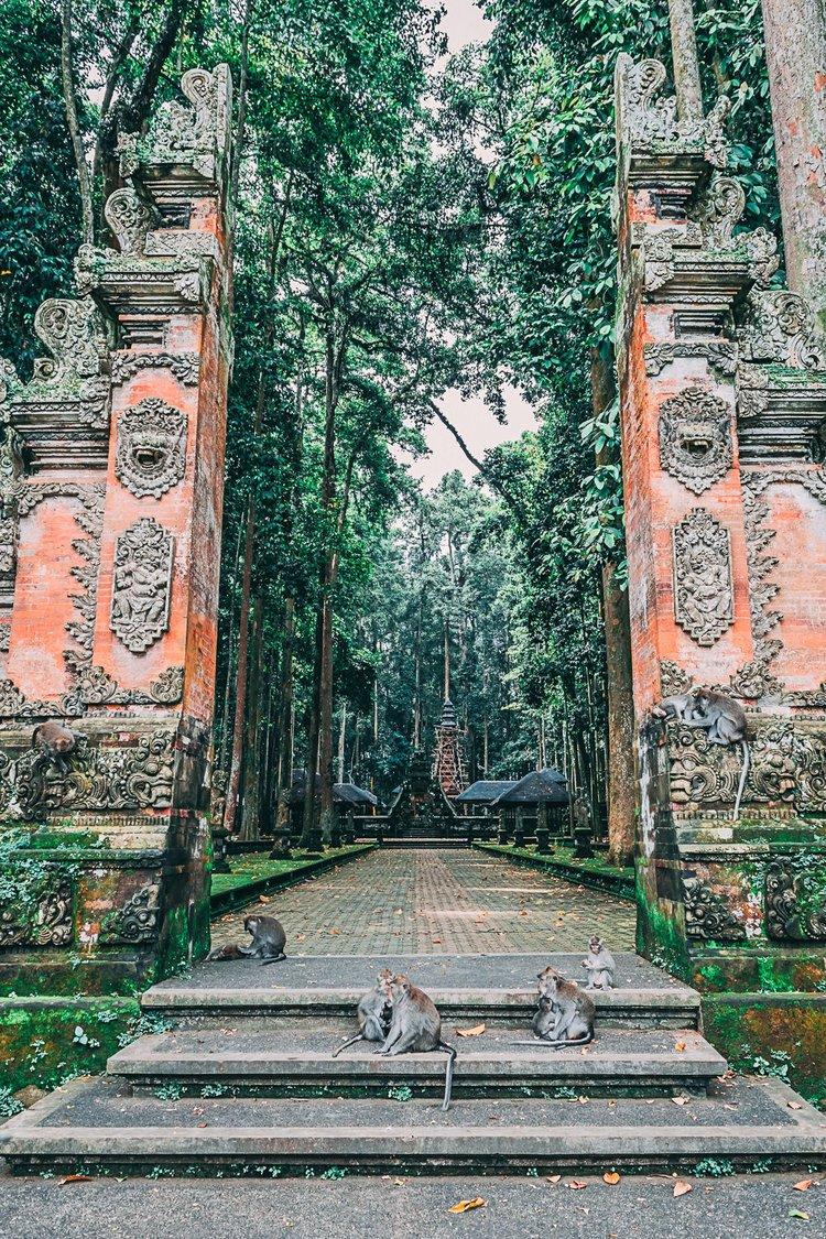 road trip asie indonesie singes blog voyage photographie