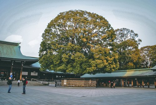 Visiter tokyo une semaine guide par jour par quartier meiji jingu arbre interieur japon asie blog voyage photographie