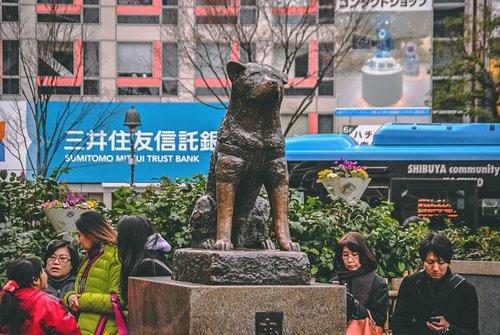 Visiter tokyo une semaine guide par jour par quartier shibuya statue hachiko japon asie blog voyage photographie