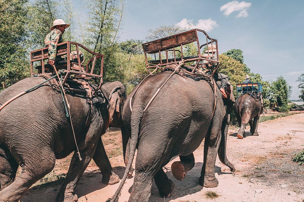 road trip asie vietnam elephants blog voyage photographie