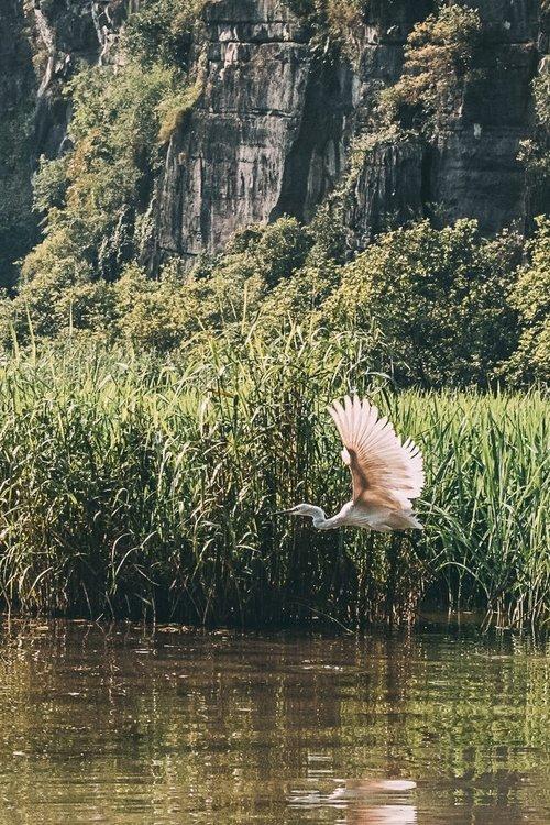 tam coc vietnam baie halong terrestre oiseaux asie blog vietnam