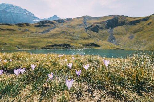 randonnee gavarnie lac pyrenees col des tentes flore france europe blog voyage photographie