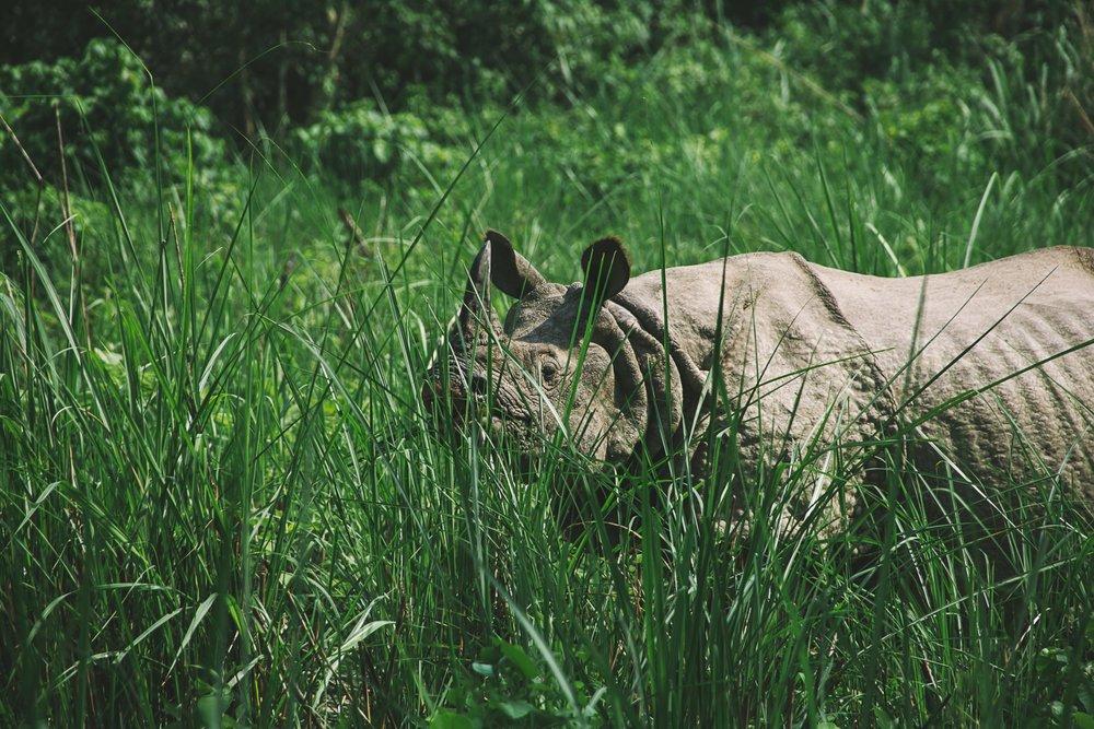 visiter nepal parc national chitwan nepal safari rhinoceros