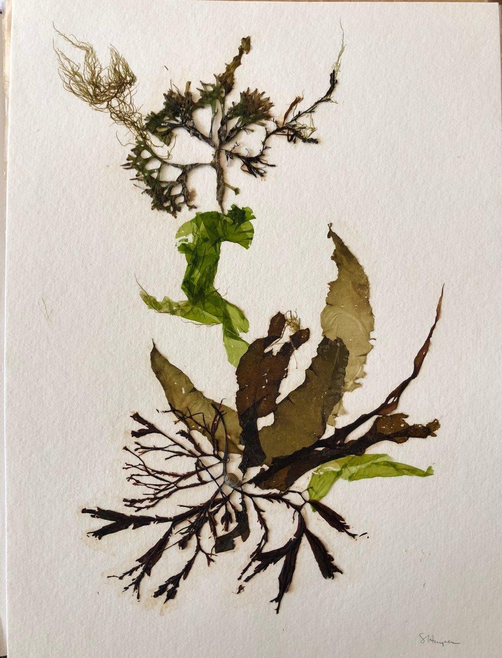 Seaweed 7/13, 11x14