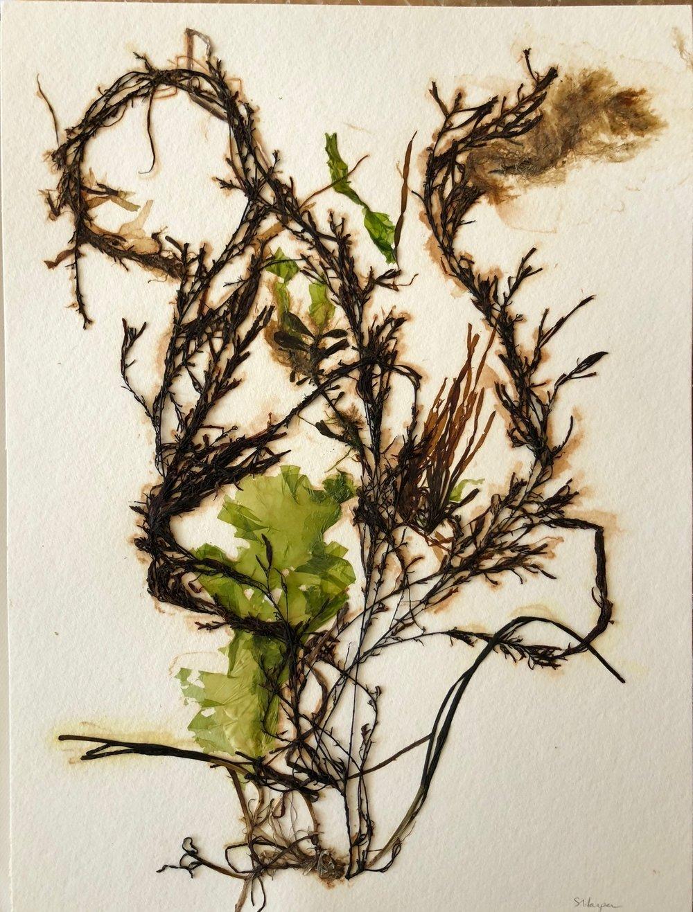 Seaweed 8/13, 11x14