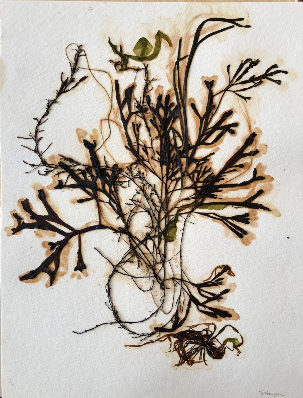Seaweed 9/13, 11x14