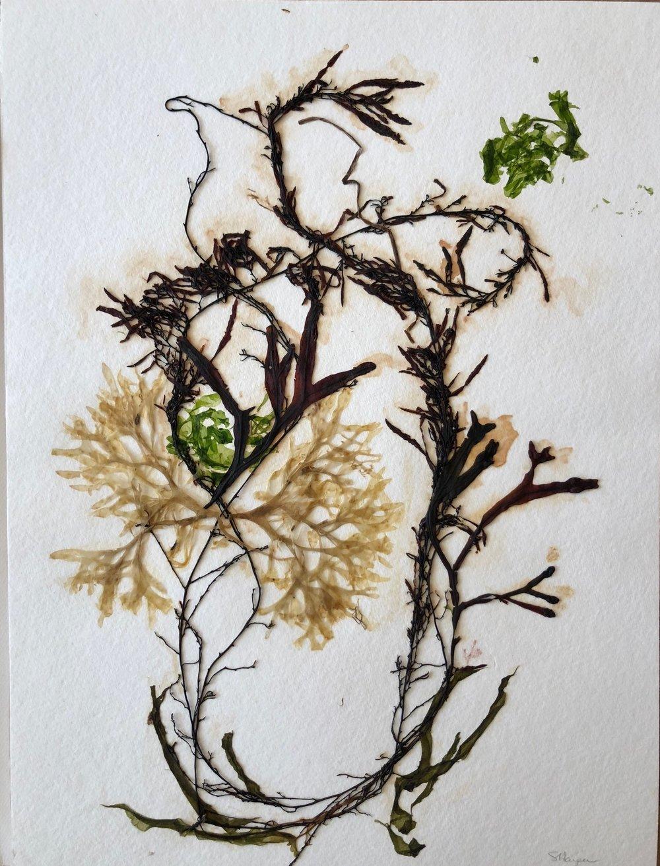 Seaweed 10/13, 11x14
