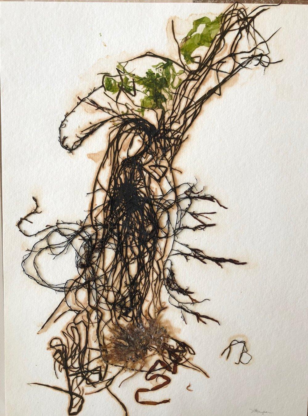 Seaweed 12/13, 11x14