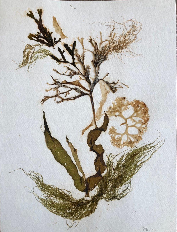 Seaweed 1/13, 11x14